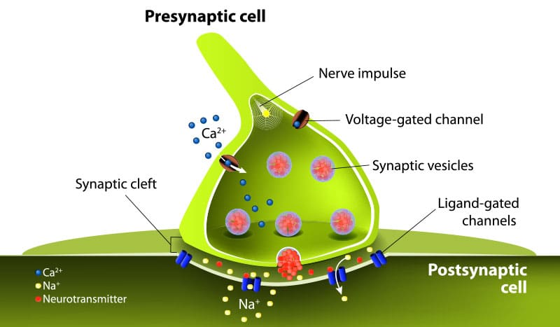 graphic of neurotransmitter evaluation